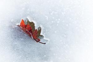 Outono & inverno