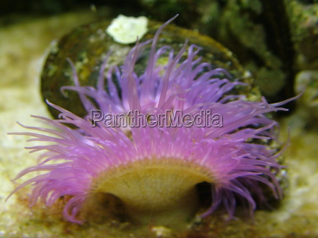 tentaculo en colores pastel