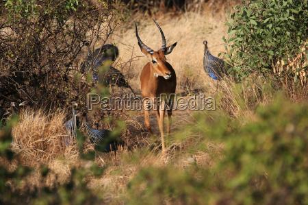fiesta vacaciones parque nacional africa kenia