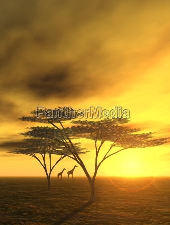 noite em africa