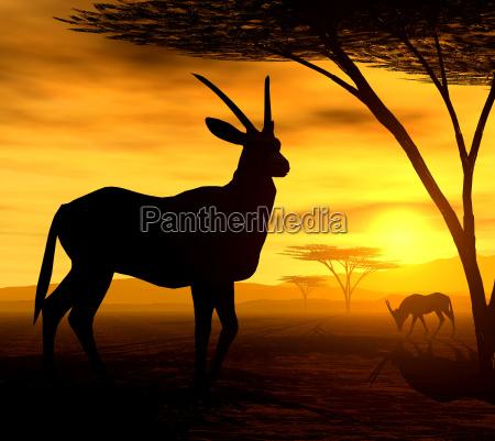 africano espirito iv