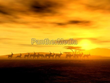 a caminhada iii oryx