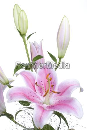 bouquet weisser hintergrund