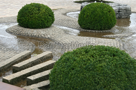 agua pedras plantas
