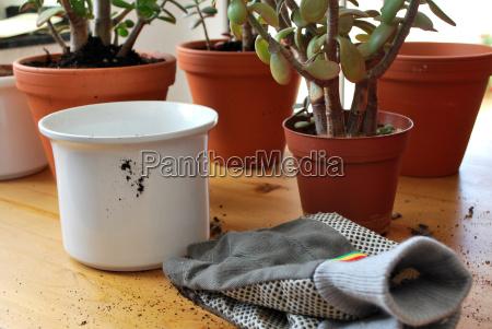 plantas repot