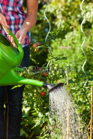 jardinagem no verao mulher de