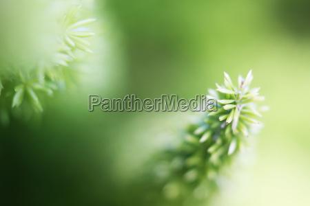 jardim verde forte profundidade de foco