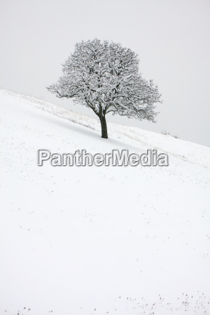 winter cold snowy oak blanket of