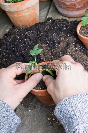 mao maos jardim planta verde madeira
