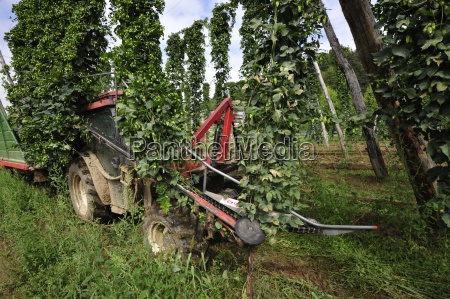 agricola agricultura salto economia agraria planta