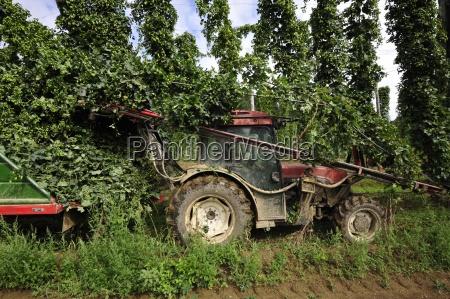frutafruta hoplupuloplantaplantasagriculturaproducao agricolaa fim de terraseconomia