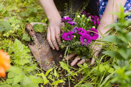 plantando flores