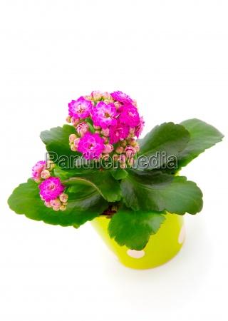 jardim flor planta verde lindas flores