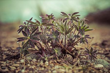 verde folhas cascalho primavera roxo talo
