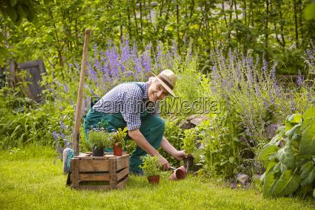 plantas de jardim homem