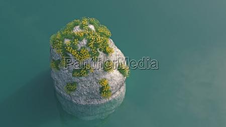 ambiente projeto flor planta lindas flores