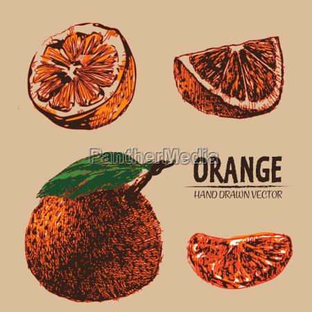 dibujado de color naranja detalle vector
